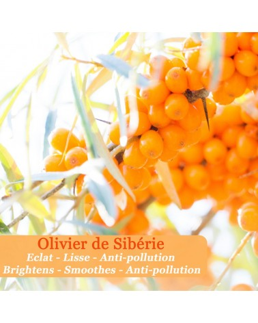 Crème lissante à l'olivier de Sibérie - Eclat Boréal - Polaar