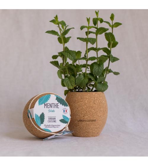 Menthe Verte Bio en Pot - Urban Cuisine