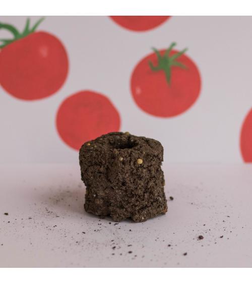 Tomate Cerise Motte - Urban cuisine