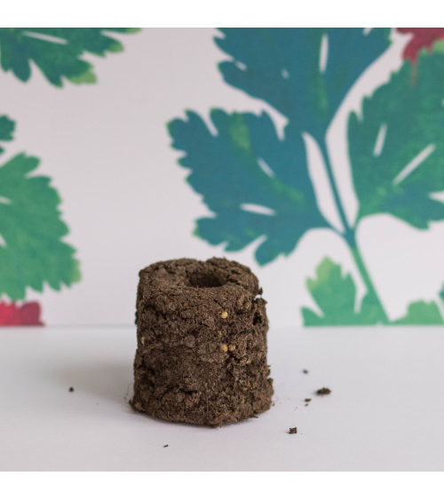 Persil Plat Bio Motte - Urban Cuisine