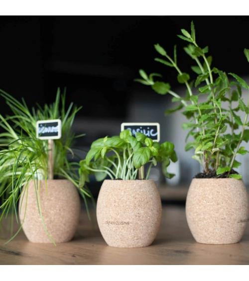 Trio d'herbes aromatiques Bio en Pot (à composer) - Urban Cuisine