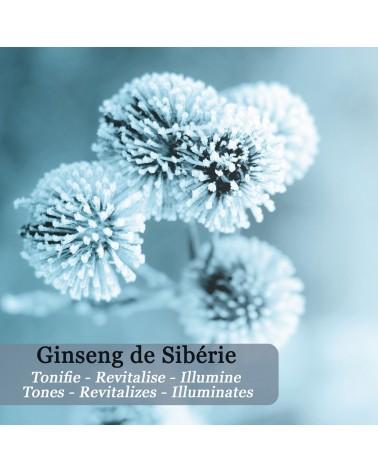 Roll-on Défatigant Regard Instantané au Ginseng de Sibérie - Icy Magic - Polaar