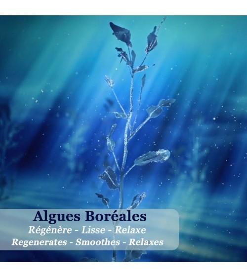 Elixir Revitalisant aux algues boréales - Nuit Polaire - Polaar